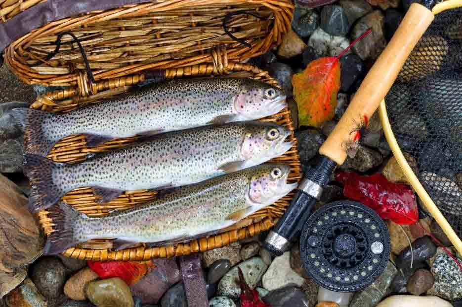 Рыбная тема сайта в Сочи