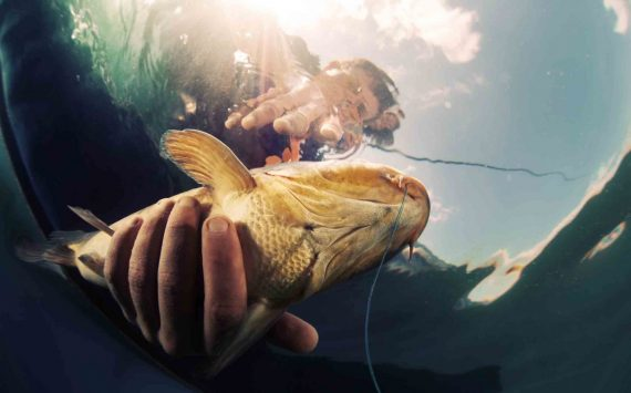 Рыба в море на рыбалке в Сочи